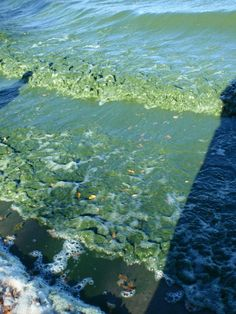 To fight algae blooms in lakes, focus on phosphorous and forget nitrogen. There are many reasons to control nitrogen pollution, but freshwater eutrophication is not one of them. While nitrogen removal is not necessary to control algal blooms in lakes, it is causing problems with soil acidification and groundwater pollution in some areas.