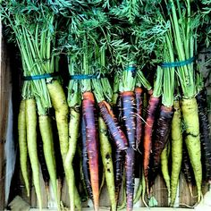 Carrots - what real carrots look like!
