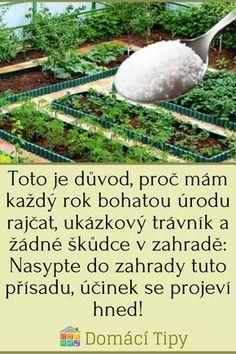 Toto je důvod, proč mám každý rok bohatou úrodu rajčat, ukázkový trávník a žádné škůdce v zahradě: Nasypte do zahrady tuto přísadu, účinek se projeví hned! Garden Club, Home And Garden, Vegetable Garden, Gardening, Outdoor Decor, Vegetable Recipes, Benches, Veggie Gardens, Lawn And Garden