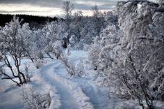 Merry Christmas!! #tromsø #winter #snow #ice #northernnorway #troms #stakkevollan #magic #peace