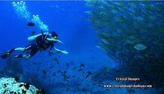 Chumphon Pinnacle Koh Tao diving