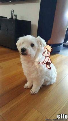 <3 Jin with his dog JJanggu!! <3