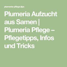Bestäubung Von Plumeria Blüten | Plumeria Pflege ? Pflegetipps ... Garten Mit Kartoffeln Pflege Tipps