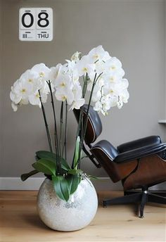 These large Orchid brightens up your home ©Anthura #phalaenopsis #15cm #Beijing #white