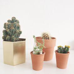 ferm LIVING Brass hexagon pot: http://www.fermliving.com/webshop/shop/green-living/hexagon-pot-small.aspx