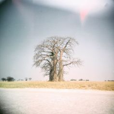 I found a medium format unfinished roll of film in my old Holga from 2008. Nothing beats the anticipation of processing old film to see what develops, especially when its 12 years old! ... pure magic, light leaks and all. This majestic, gorgeous old Baobab in Botswana, no doubt still stands regal, amidst the chaos and the noise... aaah, take me back there, wise old soul 💙 Magic Light, Holga, Light Leak, Still Standing, Old Soul, 12 Year Old, Fine Art Photography, Beats, Country Roads