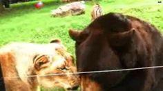 Watch: Unlikely animal BFFs cohabitate in Ga. ♥♥♥♥♥