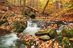 Michaux State Forest, Pennsylvania jigsaw puzzle in Waterfalls puzzles on TheJigsawPuzzles.com