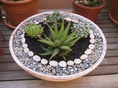 Malena Valcárcel original Art: Pequeño jardín Zen con suculentas / Little Zen garden with succulents-cool use of stones and pebbles Succulent Gardening, Succulent Terrarium, Container Gardening, Garden Plants, Indoor Plants, Organic Gardening, Vintage Gardening, Succulents In Containers, Cacti And Succulents