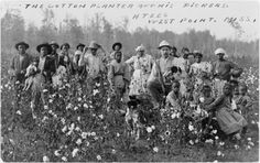 Postcard showing Euro American man holding shotgun and dog, with African American men, women, and children, in cotton field.  West Point, Miss., 1908. Library of Congress photo, public domain.