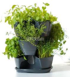 Kvetináč na bylinky Kraut, Planter Pots, Herbs, Sodas, Flowers, Projects, Herb, Medicinal Plants