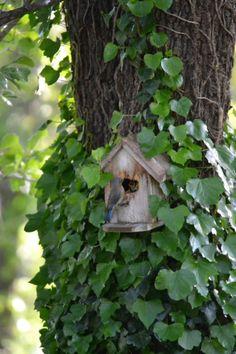 (via Pin by Debra Conklen on Cottage Garden Bird Cages, Bird Feeders, Beautiful Birds, Beautiful Gardens, Enchanted Garden, Enchanted Wood, Green Garden, Simple Pleasures, Land Scape