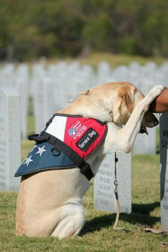 Service Dog Memorial Day Military Dogs Working Police