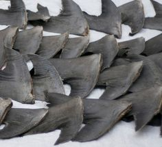 Hong Kong, Singapore protests planned after FedEx refuses to ban shark fin