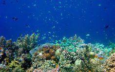 coral reef and fish near Philippines_http://www.nsf.gov/discoveries/disc_summ.jsp?cntn_id=134125&WT.mc_id=USNSF_51&WT.mc_ev=click