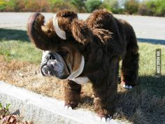 So Bully Mammoth is a new species?