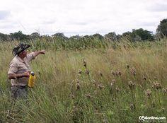 De la mano de los que saben. Pocas cosas enriquecen más un viaje que el contacto con los guías o gente del lugar, que comparten con nosotros sus conocimientos y experiencias. Y si además nos van cebando unos tererés durante la recorrida, mucho mejor. Como este guía de la Reserva Natural Guaycolec, en Formosa.
