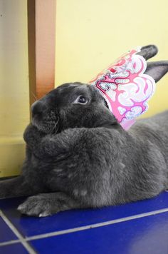 This bunny who knows she is QUEEN. | 42 Pictures That Will Restore Your Faith In Cute