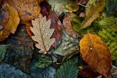 Autumn ✨✨