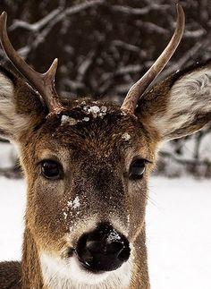 Season | Winter by hotsummmer