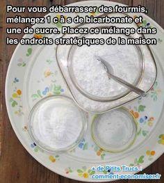 Utilisez du bicarbonate et du sucre pour éliminer les fourmis à la maison