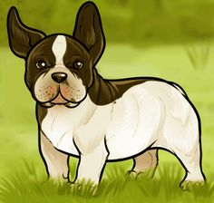 how to draw a french bulldog, french bulldog