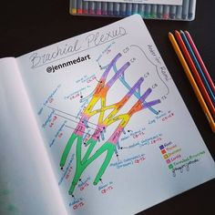 Gross Anatomy, Brain Anatomy, Medical Anatomy, Human Anatomy And Physiology, Anatomy Study, Medicine Notes, Medicine Student, School Motivation, Study Motivation