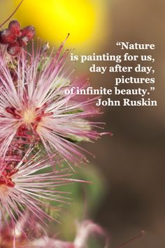 """Nature is painting for us, day after day, pictures of infinite beauty."" -- John Ruskin – image of fairy dusters in Arizona, photograph by Florence McGinn Words Quotes, Wise Words, Life Quotes, All Nature, Nature Quotes, Mother Earth, Mother Nature, John Ruskin, Sup Yoga"