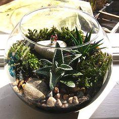 The Shopaholic Mini World Terrarium Kit