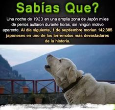 Que tristeza 😢 Did You Know, Good To Know, Told You So, True Facts, Weird Facts, Interesting Facts About World, Animals And Pets, Cute Animals, Curious Facts
