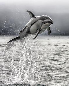 ~~Wild Dolphin by Karen Celella~~