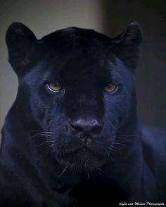Black King Photo by ©Light and Malton Photography #WildlifeFriend