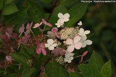 Versoja Vaahteramäeltä Fruit, Garden, Plants, Garten, Lawn And Garden, Gardens, Plant, Gardening, Outdoor