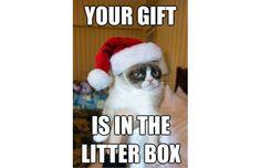 The 50 Funniest Grumpy Cat Memes,no. 26