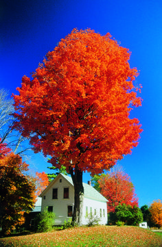 Foliage / White House, Vermont, Photo Credit: Discover New England- by Cris Figueired♥ Beautiful World, Beautiful Places, New England Fall, Autumn Scenes, Fall Wallpaper, Fall Pictures, Amazing Nature, Nature Photos, Beautiful Landscapes