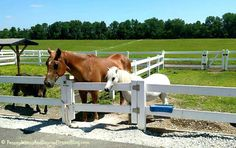 Land of the Little Horses in Gettysburg Pennsylvania - Fun for the entire family!