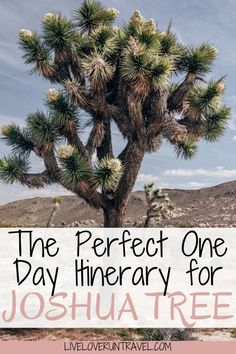 The perfect itinerary for one day in Joshua Tree National Park in California including the best hikes and Instagram photo spots. #joshuatree #nationalpark #california | things to do in Joshua Tree | Joshua Tree Instagram photo spots | Joshua Tree photography | one day itinerary Joshua Tree | Joshua Tree in one day | Joshua Tree hikes | Joshua Tree California | California travel | California road trip | National Park California | national parks united states California California, California National Parks, Us National Parks, Usa Travel Guide, Travel Usa, Travel Tips, Travel Guides, Death Valley National Park, Joshua Tree National Park
