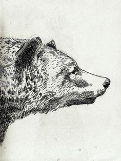 #bear #sketch