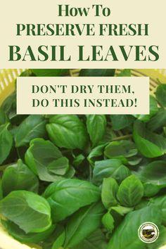 Storing Fresh Basil, Freezing Fresh Herbs, Preserve Fresh Herbs, How To Preserve Basil, Fresh Basil Recipes, Herb Recipes, Vegan Recipes, Preserving Basil, Basil Harvesting