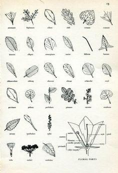 (via   Plants)