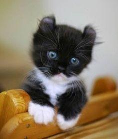 This little fella is just tooooo cute!