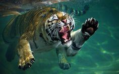 Animals-Photos-In-Strange-Moments-1