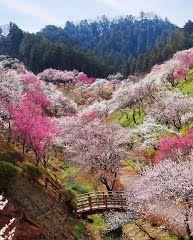 Panoramio - Photo of The Last View of Yoshino-Baigo