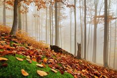 Autumn forest 3 - www.danielrericha.cz