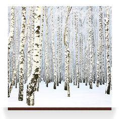 Forest Wallpaper - Robin Sprong Surface Designer
