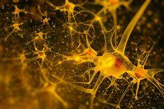 neuroni (2)