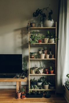 Indoor Plant Decor ideas are fun for people of all ages. You don't have to have a huge garden or your Indoor Plant Decor Ideas are perfect for small garden arrangements. There are many different plants that are suitable for… Continue Reading → House Plants Decor, Plant Decor, Plant Wall, Uo Home, Ideias Diy, Plant Shelves, Indoor Plants, Sweet Home, Bedroom Decor