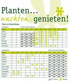 Hoe en wanneer bloembollen planten? - Intratuin