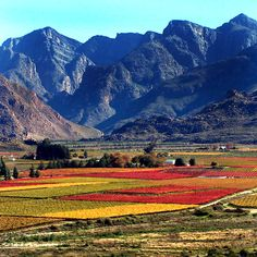 Autumn in Western Cape, South Africa. The Western Cape is a South African province with coasts bordering the Indian and Atlantic oceans. It's known for the port city of Cape Town, set beneath Table Mountain, part of a national park of the same name. Paises Da Africa, Out Of Africa, South Africa, Namibia, Africa Travel, Countries Of The World, Photos Du, Cape Town, Wonders Of The World
