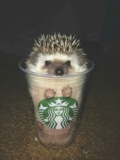 Hedgehog latte.